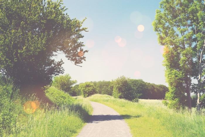 Nature trail in a summer landscape