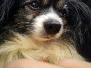 Yoyo behinderter Hund