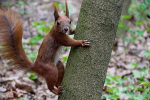 the-squirrel-2705479__340