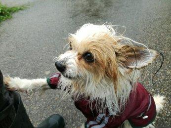 Auch im Alter wird man vom Regen nicht verschont